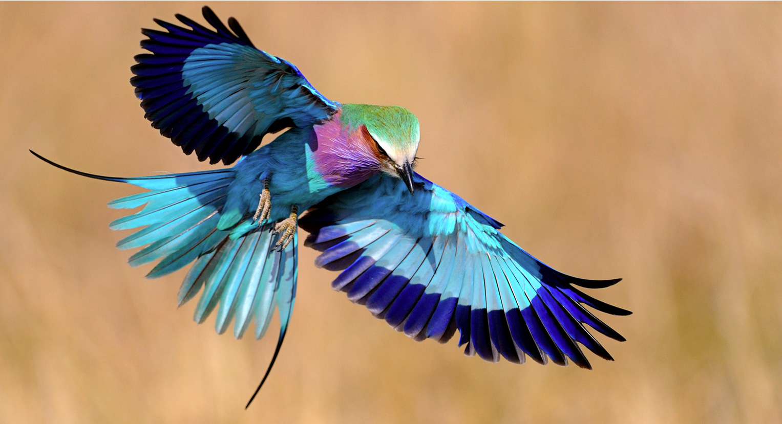 10 exotic birds that you ve never seen before